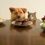 6 alimentos que podem fazer mal ao seu cão