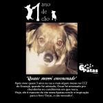 # 1º cão: OSCAR