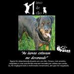 # 5º cão: AGATA