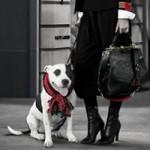 Ralph Lauren promove a adoção de cães