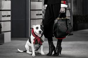 aspca-teams-up-with-ralph-lauren-adopt-shelter-dog-month
