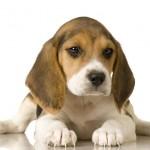 Comissão vai lutar contra o uso de animais