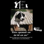# 2º cão: BRANCO