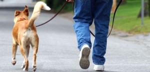 cachorro-adestramento-caociente-passeando-sem-coleira-516x250