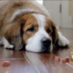 Você sabe quando seu cão está doente?