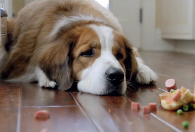 cachorro-febre