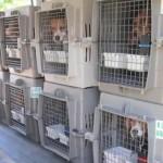 Faculdades desistem de usar animais em aulas