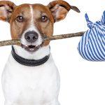 Como viajar com o cachorro