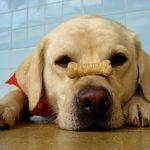 Como estimular o seu cão a comer