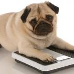 Como evitar a obesidade do seu cão