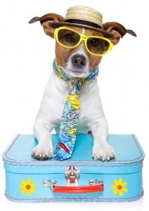 isolated-travel-dog