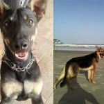 Família procura cães em Guarujá
