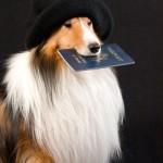 Governo cria passaporte para pets