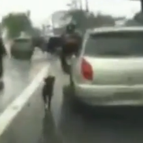 Veja o vídeo do cão abandonado no transito de SP