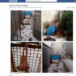 Cães permanecem abandonados, após um ano