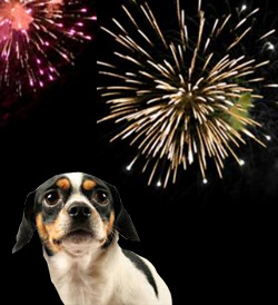 dog-afraid-of-fireworks