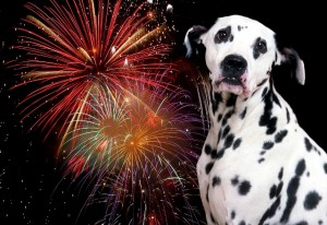 georgetown-dog-walker-fireworks