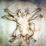 Entenda a experimentação animal