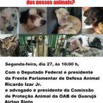 Vamos discutir a situação dos animais de Guarujá