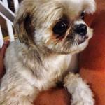 Cadela encontrada em Santos