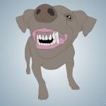 Como descobrir pelos dentes a idade do seu cão