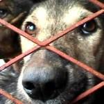 Descubra 8 motivos para adotar um cão