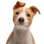 Cães sabem o que os donos sentem, diz pesquisa