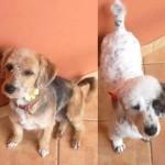 Cadelas desaparecidas, São Paulo-SP