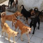 Aposentada precisa doar 50 cães em Santos