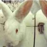 Concea nega o fim do teste em animais