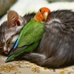animais-amigos-5