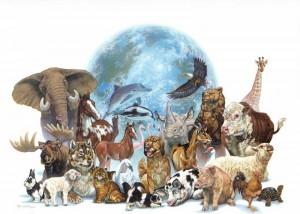 animais todos