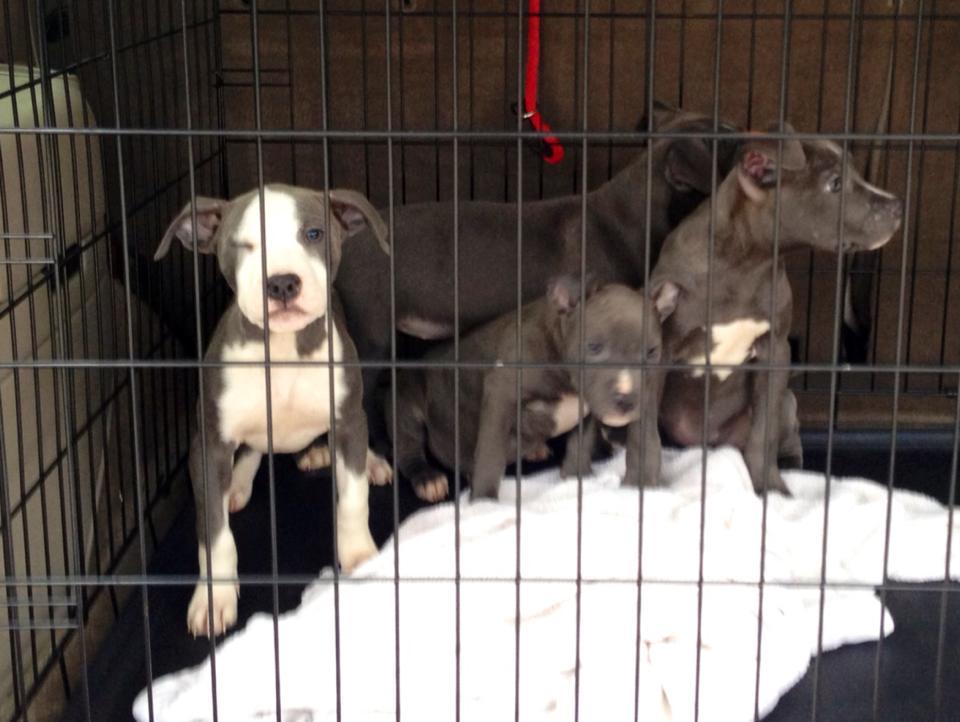 cachorros-abrigo-lar-11