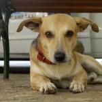 Você sabe o que é um cão comunitário?