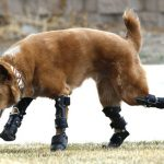 13 animais salvos por uma prótese