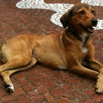 15 fotos de cães no momento da adoção