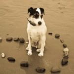 motivos-para-ter-cachorro-14