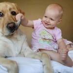 motivos-para-ter-cachorro-5