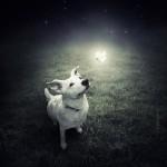 Artista lança campanha para adoção de cães