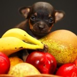 8 frutas que seu cão pode – e deve – comer