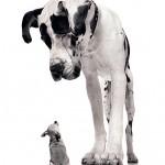 Com cães, tamanho não é documento