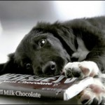 Não dê chocolate para o seu cão