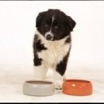 Giárdia em cães