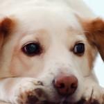 O que fazer se seu cão desaparecer