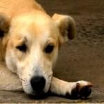 Cachorro espera 25 dias dono sair do hospital