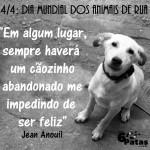 Dia mundial do animais de rua