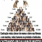 Guarujá abre inscrições para castração