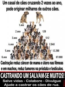 caes_castracao02_thumb[2]