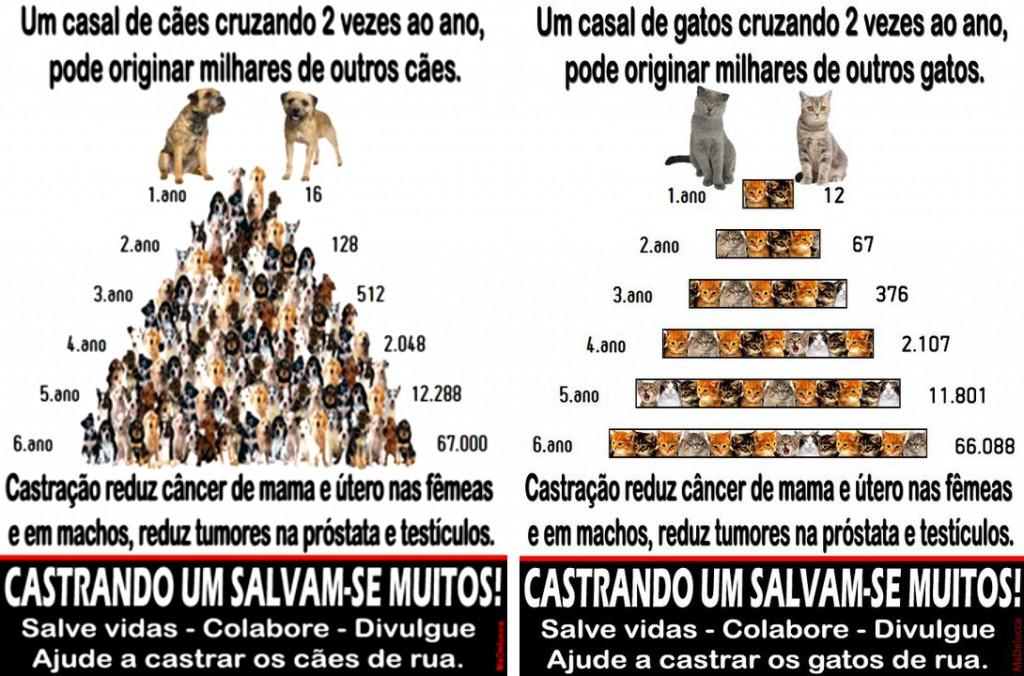 caes_castracao02_thumb[2]11