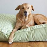 4 ideias – geniais – de fazer casas e camas